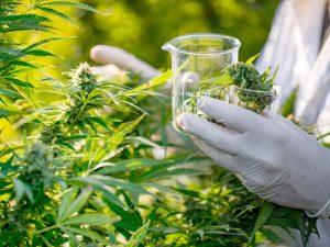 cannabis-in-uk-legalised.jpg