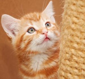 cat-2-300x276.jpg