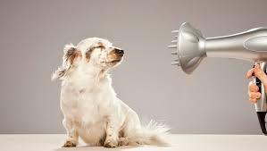 Pips Pet Grooming.jpg